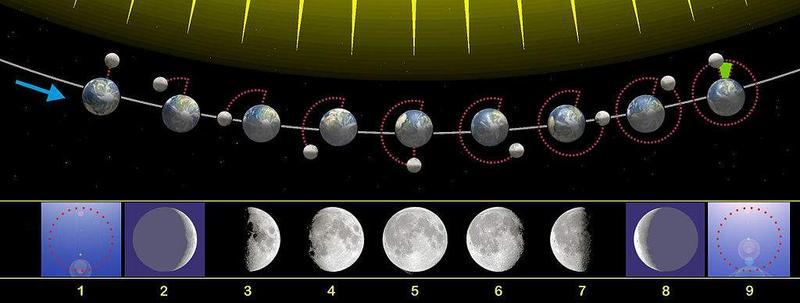le quattro fasi lunari